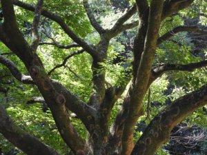 知識の枝葉